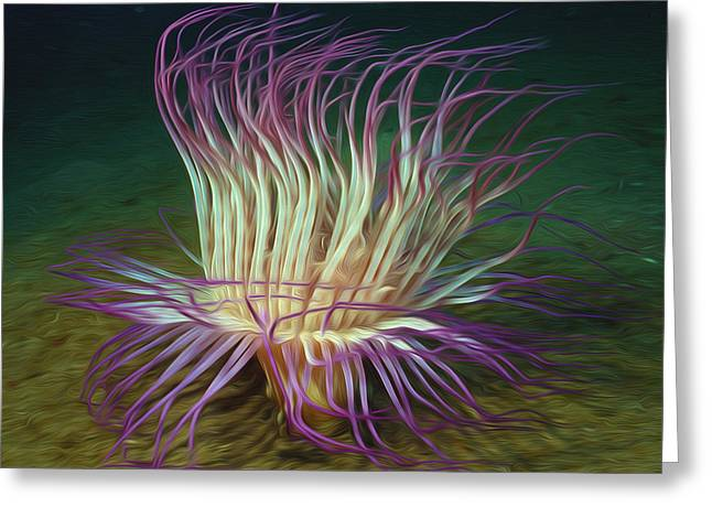 Doughboy Greeting Cards - Beautiful Sea anemone 1 Greeting Card by Lanjee Chee