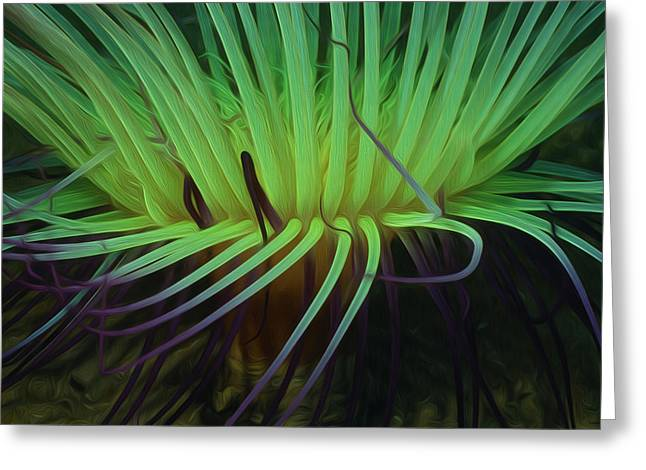 Sealive Paintings Greeting Cards - Beautiful Sea anemone 3 Greeting Card by Lanjee Chee