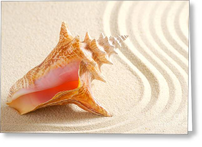 Seashell Pyrography Greeting Cards - Beautiful sea shell Greeting Card by Boon Mee