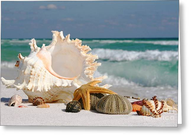 Large Clock Pyrography Greeting Cards - Beautiful Sea Shell on Sand Greeting Card by Boon Mee