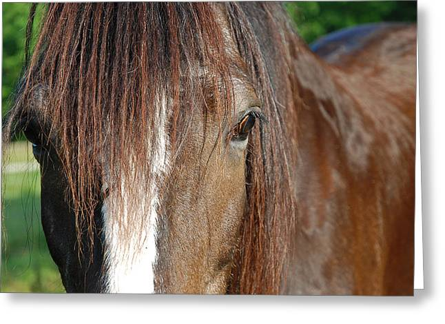 Mare Greeting Cards - Beautiful Shire Greeting Card by Jennifer Lyon