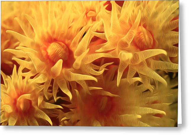 Sealive Paintings Greeting Cards - Beautiful soft coral flowers underwater 1 Greeting Card by Lanjee Chee