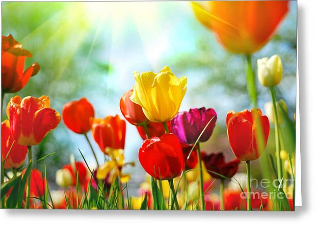 Garden Art Pyrography Greeting Cards - Beautiful Spring Tulips Greeting Card by Boon Mee
