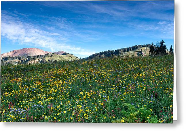 Daiseys Greeting Cards - Beautiful Spring Wildflowers Greeting Card by Tim Reaves