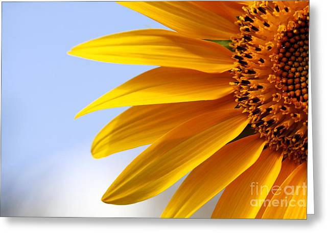 Edible Pyrography Greeting Cards - Beautiful Sunflower Closeup Greeting Card by Boon Mee