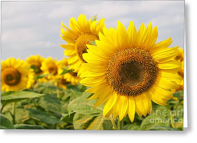 Aimelle Prints Greeting Cards - Beautiful Sunflowers Greeting Card by Boon Mee