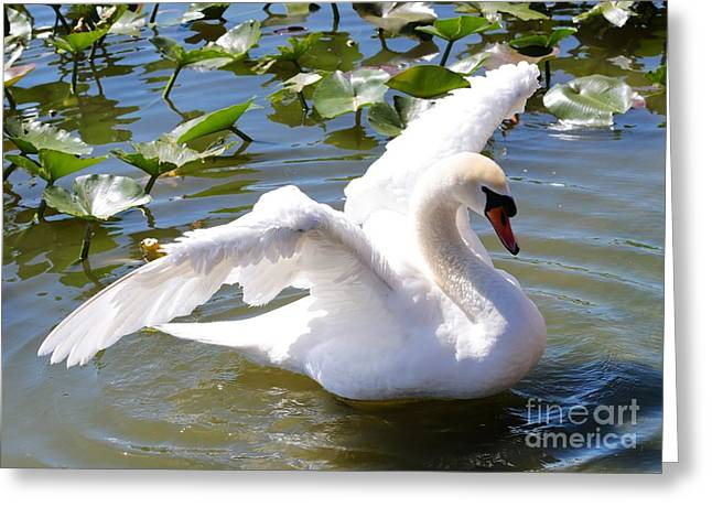 Glassy Wing Greeting Cards - Beautiful Swan Wings Greeting Card by Carol Groenen