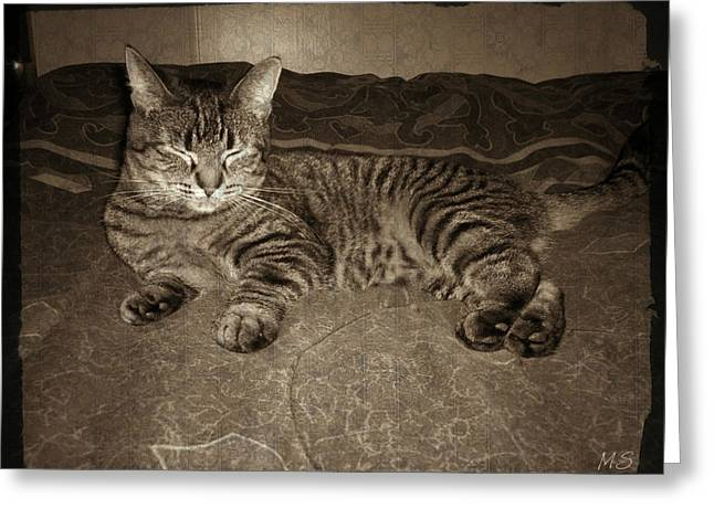 Sepia And Cream Greeting Cards - Beautiful Tabby Cat Greeting Card by Absinthe Art By Michelle LeAnn Scott