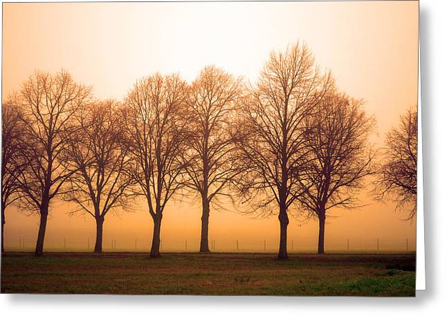 Beautiful Trees In The Fall Greeting Card by Toppart Sweden