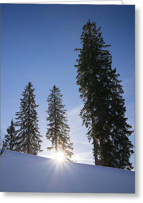 Winterly Greeting Cards - Beautiful trees on a sunny winter day Greeting Card by Matthias Hauser
