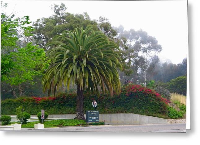 Ventura California Greeting Cards - Beautiful Ventura Palm Greeting Card by Denise Mazzocco