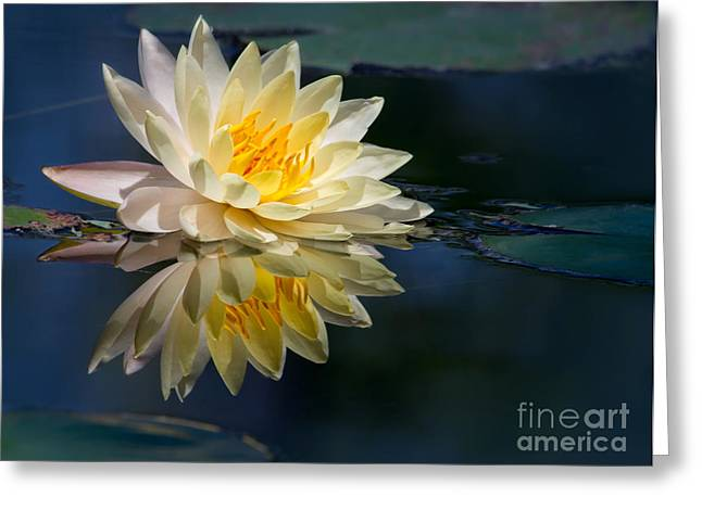 Hawaiian Pond Greeting Cards - Beautiful Water Lily Reflection Greeting Card by Sabrina L Ryan