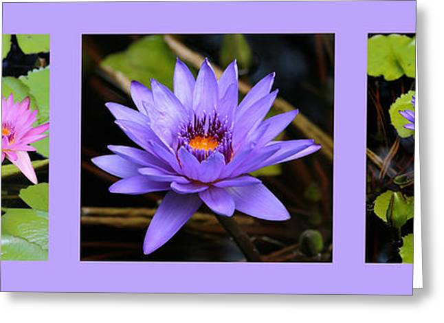 Pink And Purple Flowers Greeting Cards - Beautiful Water Lily Triptych Greeting Card by Carol Groenen