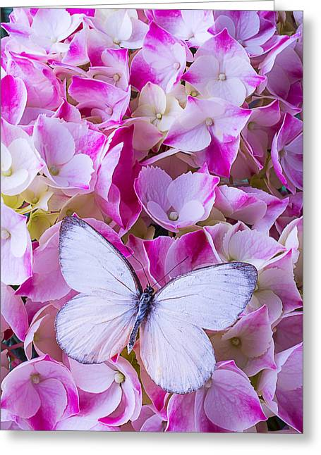 White Butterfly Greeting Cards - Beautiful White Butterfly Greeting Card by Garry Gay