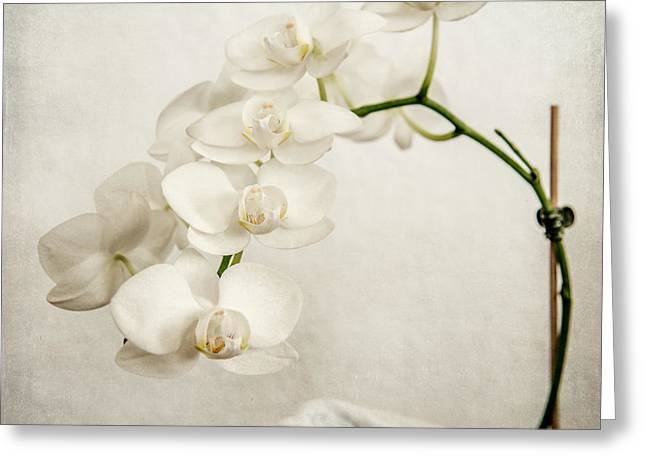 Hannes Cmarits Greeting Cards - Beautiful white orchid II Greeting Card by Hannes Cmarits
