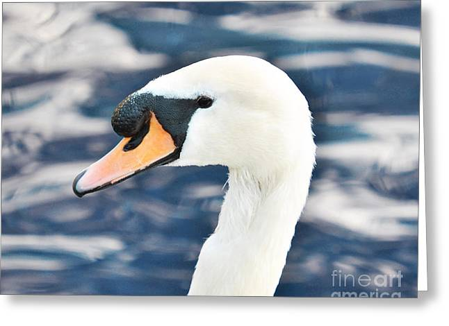 Animals Love Greeting Cards - Beautiful white swan in blue water Greeting Card by Aleksandar Mijatovic