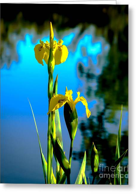 Monocots Greeting Cards - Beautiful Wild Yellow Iris Greeting Card by Robert Bales