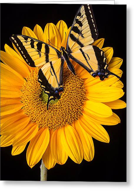 Antenna Greeting Cards - Beautiful Wings On Sunflower Greeting Card by Garry Gay