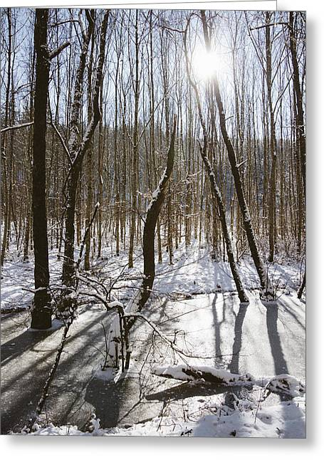 Beautiful Winter Day In The Forest The Sun Is Shining Greeting Card by Matthias Hauser