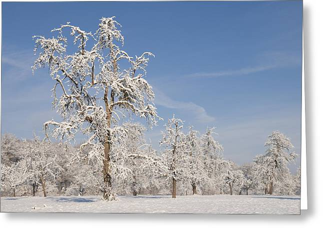 Snow-covered Landscape Photographs Greeting Cards - Beautiful winter day with snow covered trees and blue sky Greeting Card by Matthias Hauser