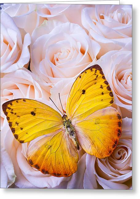 Gorgeous Flowers Greeting Cards - Beautiful Yellow Butterfly Greeting Card by Garry Gay