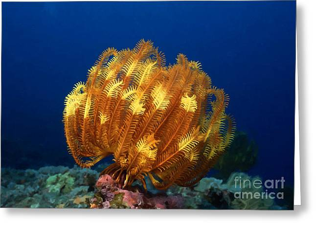 Coral Spawning Greeting Cards - Beautiful yellow coral 1 Greeting Card by Lanjee Chee