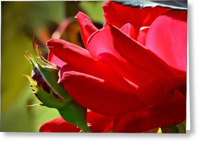 Arkansas Greeting Cards - A Star Is Born Greeting Card by Nava  Thompson