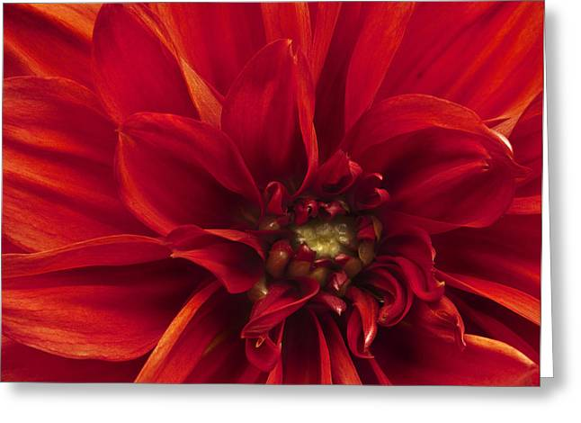 Stamen Greeting Cards - Beautifully toned macro close up of flower Greeting Card by Matthew Gibson