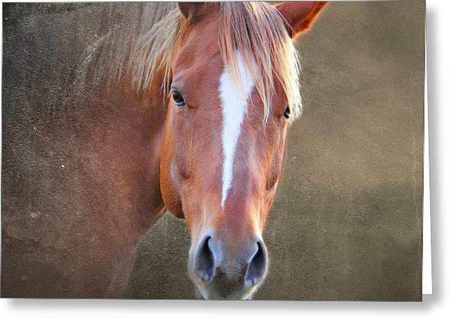 Race Horse Greeting Cards - Beauty 4 Greeting Card by Mark Ashkenazi