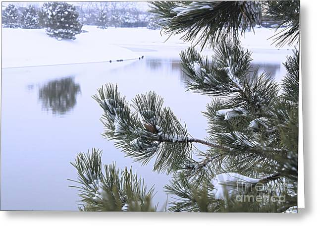 Winter Storm Greeting Cards - Beauty After The Storm Greeting Card by Barbara Dean