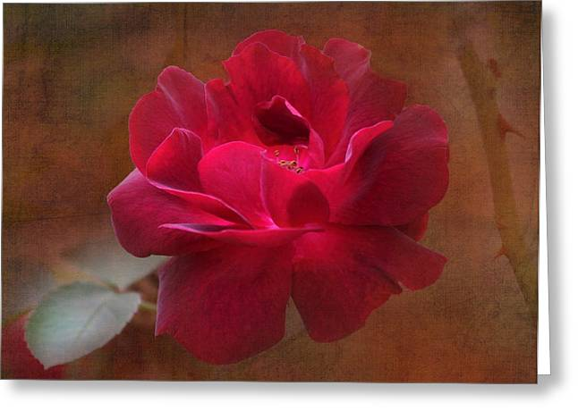 Beauty Among Thorns Greeting Card by Angie Vogel