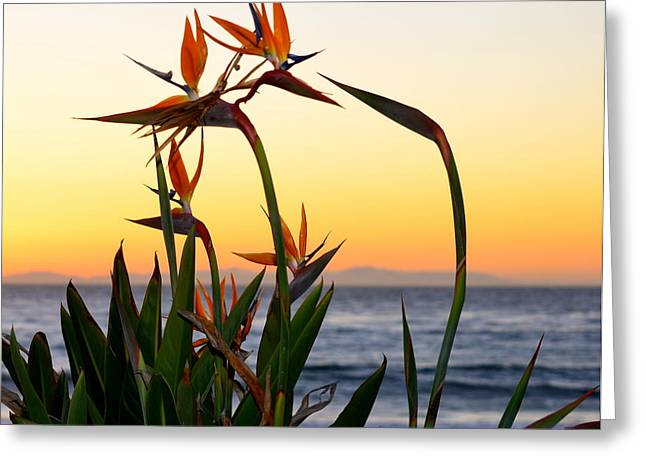 Sunset Framed Prints Greeting Cards - Beauty and Beyond Greeting Card by Johanne Peale