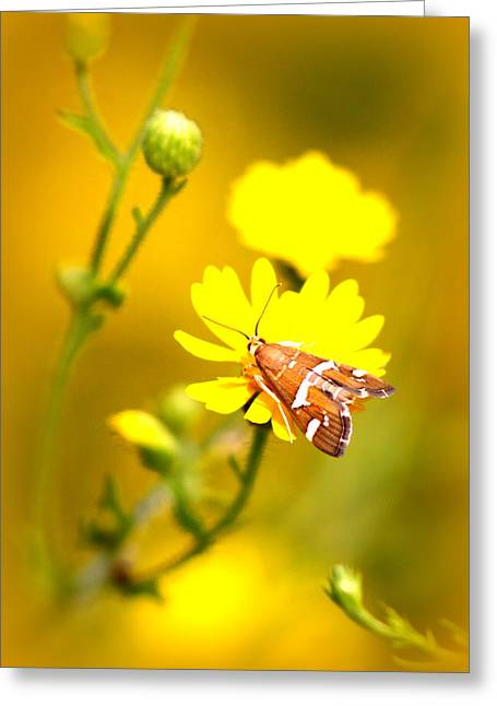 Travis Truelove Photography Greeting Cards - Beauty at its Best Greeting Card by Travis Truelove