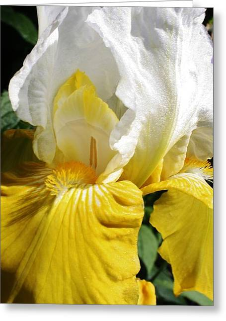 Beauty For The Eye Greeting Card by Bruce Bley