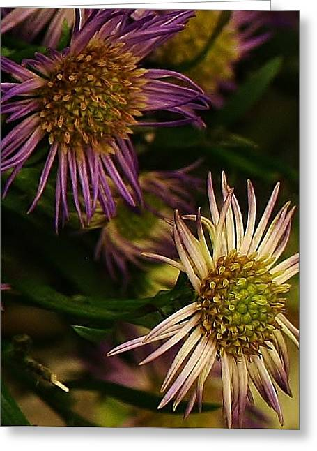 Flower Blossom Greeting Cards - Beauty from the Garden Greeting Card by Bruce Bley