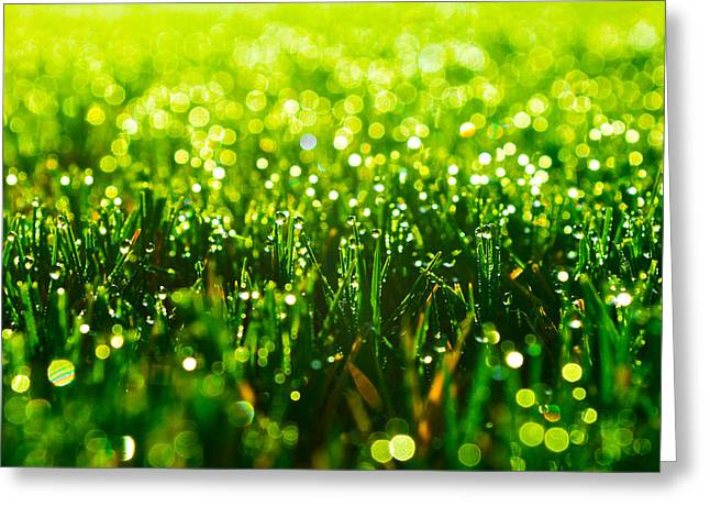 Wet Grass Greeting Cards - Beauty in Green Greeting Card by Parker Cunningham