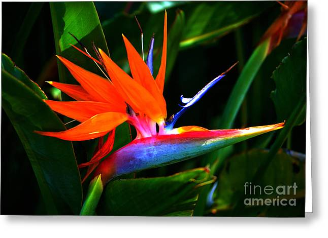 Botanical Greeting Cards - Beauty in Paradise - Bird of Paradise Greeting Card by Susanne Van Hulst