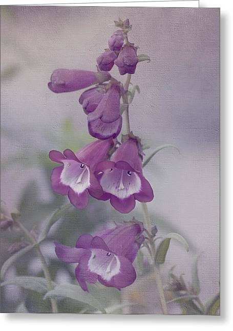 Intrigue Greeting Cards - Beauty in Purple Greeting Card by Kim Hojnacki
