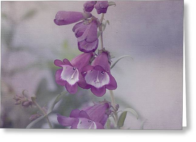 Beauty in Purple Greeting Card by Kim Hojnacki
