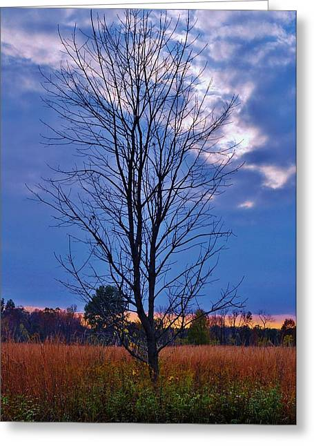Boonies Greeting Cards - Beauty in Solitude Greeting Card by Michelle McPhillips