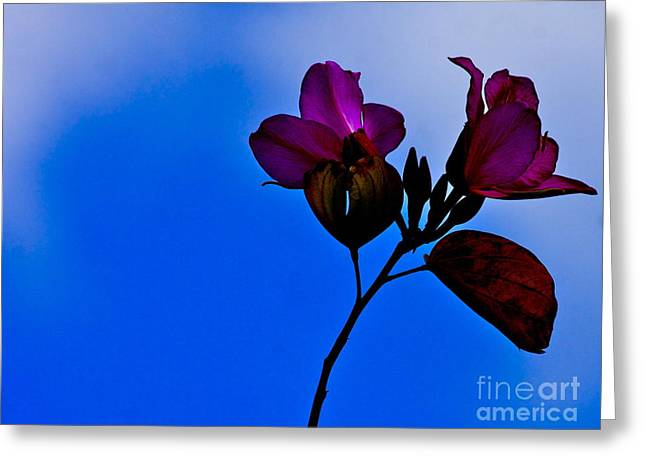Flowers Against The Sky Greeting Cards - Beauty in the Dark Greeting Card by Elysia Richardson