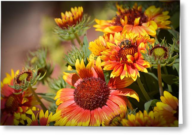 Beauty In The Garden Greeting Card by Lynn Bauer