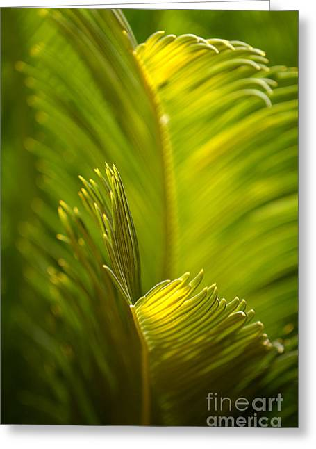 Leaves In Hair Greeting Cards - Beauty in the Sunlight Greeting Card by Deb Halloran