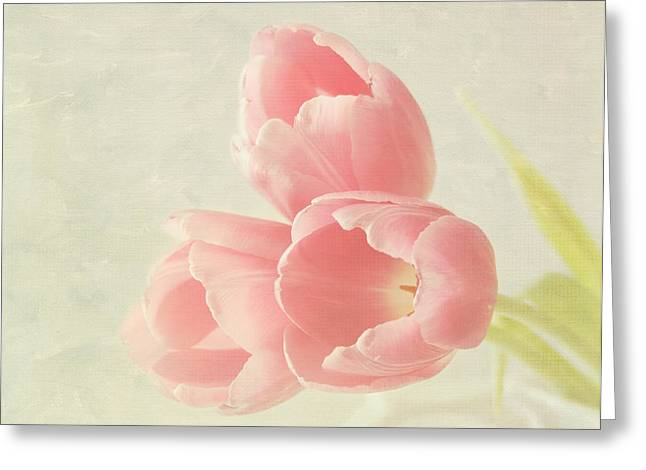 Mother Gift Greeting Cards - Beauty in Three Greeting Card by Kim Hojnacki