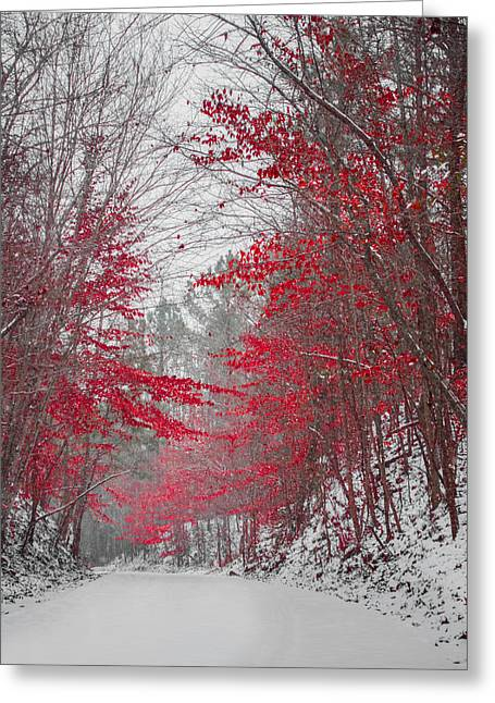 Snowstorm Greeting Cards - Beauty in Winter Greeting Card by Parker Cunningham