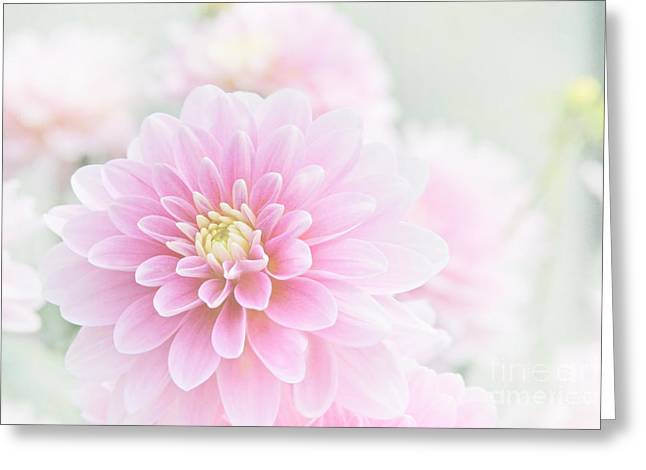 Soft Colour Greeting Cards - Beauty IV Greeting Card by Sharon Mau