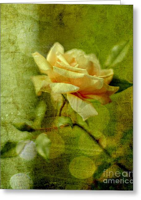 Tea Rose Greeting Cards - Beauty Greeting Card by Linde Townsend