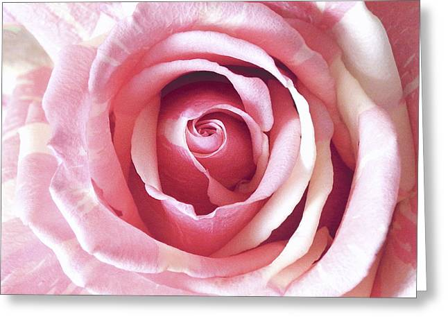 Julie Palencia Photography Greeting Cards - Beauty of a Gelato Rose Greeting Card by Julie Palencia