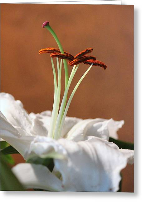 Beauty Of A Lily Greeting Card by Rosanne Jordan