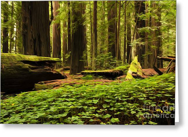 Canadian Photographer Greeting Cards - Beauty Of California Redwoods 4 Greeting Card by Bob Christopher